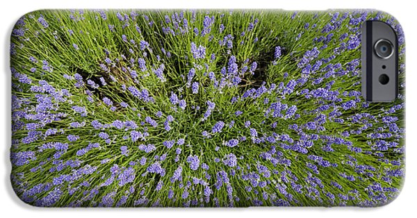 Agricultural iPhone Cases - Lavender Explosion iPhone Case by Tim Gainey