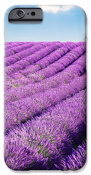 Lavender field and tree in summer Provence France. iPhone Case by Matteo Colombo