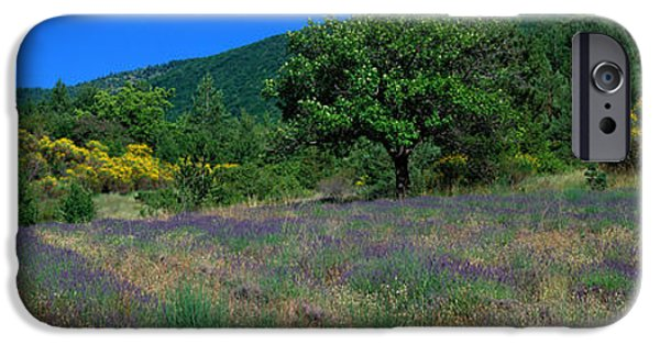 Floral Photographs iPhone Cases - Lavender Field La Drome Provence France iPhone Case by Panoramic Images