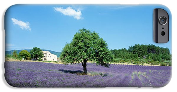 Floral Photographs iPhone Cases - Lavender Field Provence France iPhone Case by Panoramic Images