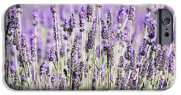 Shower Curtain iPhone Cases - Lavender fields  iPhone Case by Anahi DeCanio - ArtyZen Studios