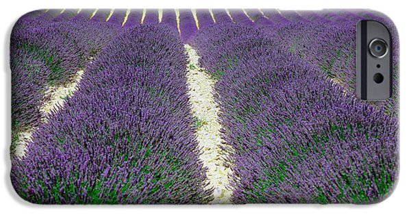 World Destination iPhone Cases - Lavender, French Provence iPhone Case by Adam Sylvester