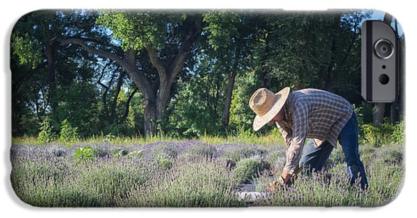 Laborers iPhone Cases - Lavender Harvest iPhone Case by Mary Lee Dereske