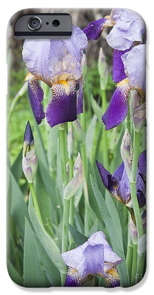 Yorktown Virginia iPhone Cases - Lavender Iris Group iPhone Case by Teresa Mucha