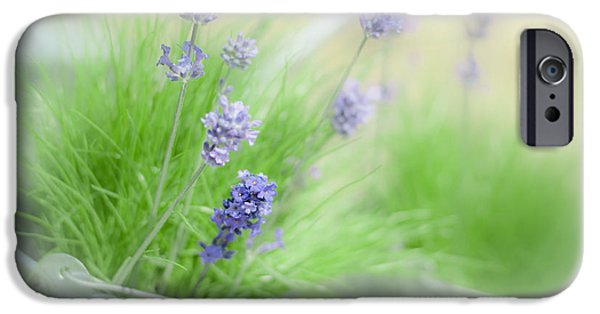 Flowerpot iPhone Cases - Lavender Sprigs iPhone Case by Amanda And Christopher Elwell