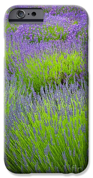 Close Up iPhone Cases - Lavender Study iPhone Case by Inge Johnsson