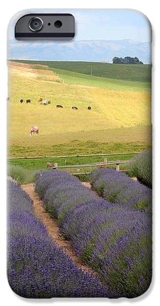 Lavender Valley iPhone Case by Carol Groenen