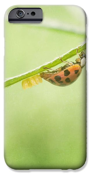 Laying Eggs iPhone Case by Jeff Swanson
