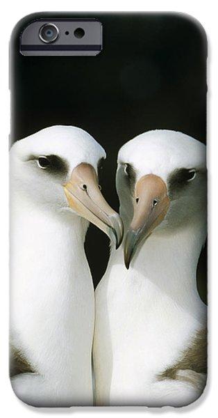 Bonding iPhone Cases - Laysan Albatross Pair Bonding Hawaii iPhone Case by Tui De Roy