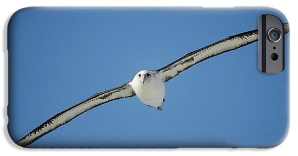 Albatross iPhone Cases - Laysan Albatross Soaring Hawaii iPhone Case by Tui De Roy