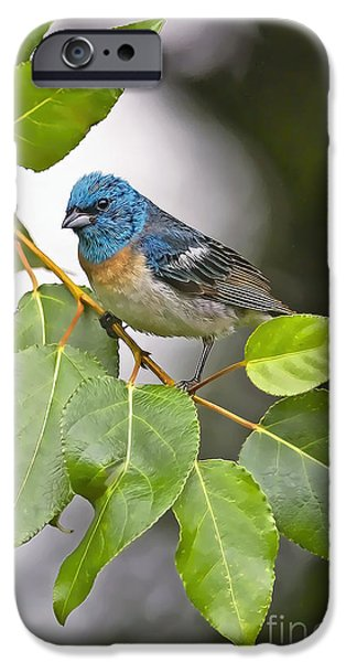 Bunting iPhone Cases - Lazuli Bunting 3a iPhone Case by Sharon  Talson