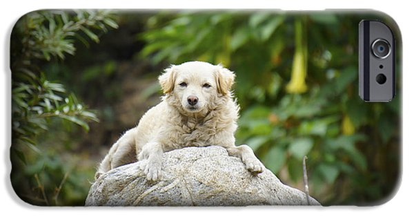 Dog iPhone Cases - Lazy Dog iPhone Case by Aged Pixel