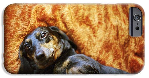 Lazy Dog iPhone Cases - Lazy Dog iPhone Case by Angel  Tarantella
