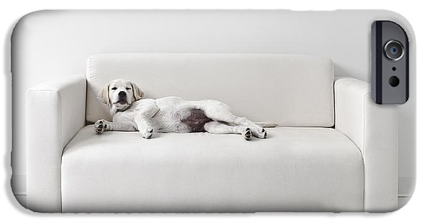 Mischief iPhone Cases - Lazy Dog on the Sofa iPhone Case by Diane Diederich