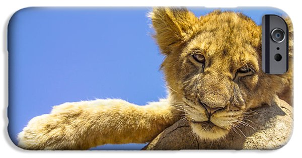 Sleepy iPhone Cases - Lazy Lion iPhone Case by Diane Diederich