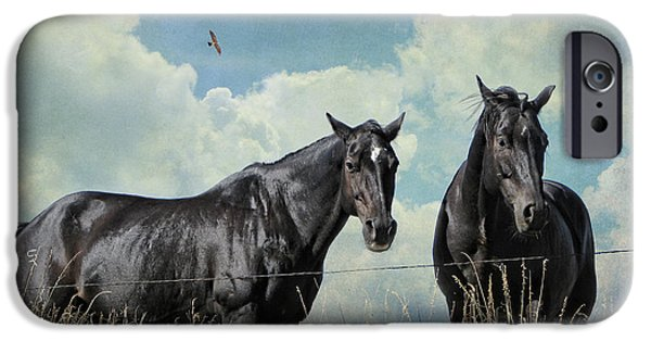 American Quarter Horse iPhone Cases - Lazy Summer Day iPhone Case by Karen Slagle