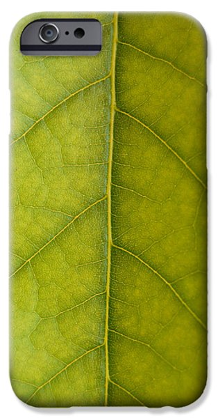 Detail iPhone Cases - Leaf Detail iPhone Case by Gina Dsgn