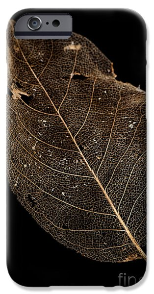 Leaf Lace iPhone Case by Anne Gilbert