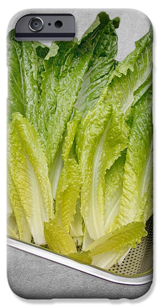 Leaf Lettuce iPhone Case by Andee Design