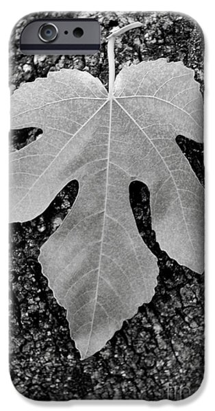 Leaf on Bark iPhone Case by Andrew Brooks