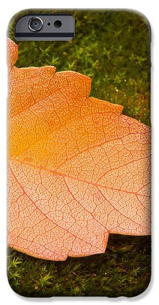 Leaf on Moss iPhone Case by Adam Romanowicz