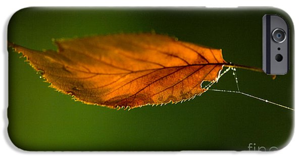 Fall Season iPhone Cases - Leaf on Spiderwebstring iPhone Case by Iris Richardson