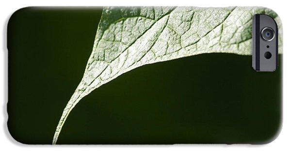 Avant Garde iPhone Cases - Leaf iPhone Case by Tony Cordoza