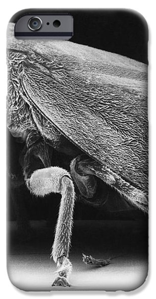 Leafhopper iPhone Case by David M. Phillips