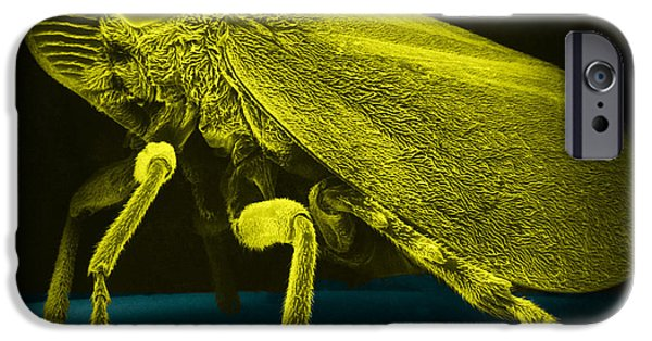 Watercress iPhone Cases - Leafhopper, Sem iPhone Case by David M. Phillips