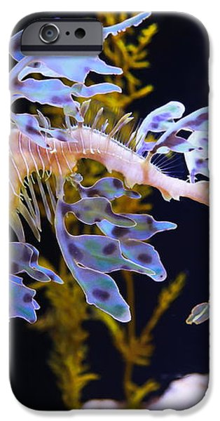 Leafy Sea Dragon - Seahorse iPhone Case by Russ Harris
