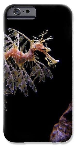 Leafy Sea Dragon iPhone Case by Jonathan Sabin