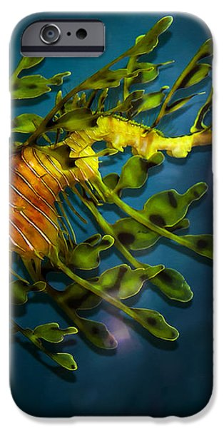 Leafy Sea Dragon iPhone Case by Artist and Photographer Laura Wrede