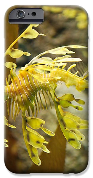 Leafy Sea Dragon iPhone Case by Shane Kelly