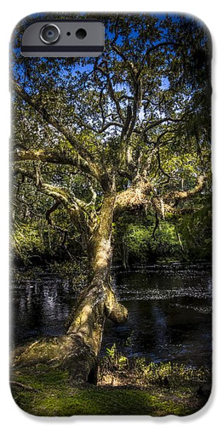 Spanish Moss iPhone Cases - Leaning Oak iPhone Case by Marvin Spates