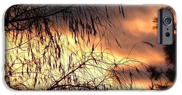 Willow Lake iPhone Cases - Leaning Willow Silhouette iPhone Case by Will Borden