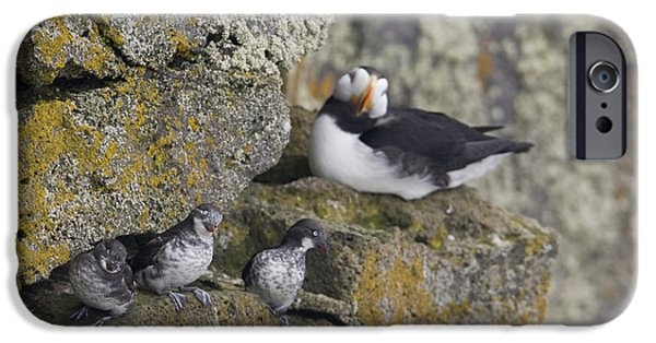 Ledge iPhone Cases - Least Auklets Perched On A Narrow Ledge iPhone Case by Milo Burcham