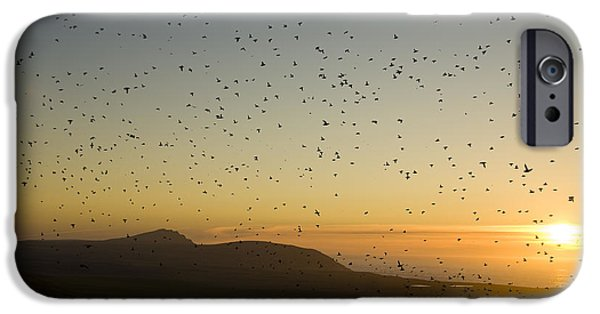 First Family iPhone Cases - Least Auklets, Returning To Their Nest iPhone Case by Brian Guzzetti