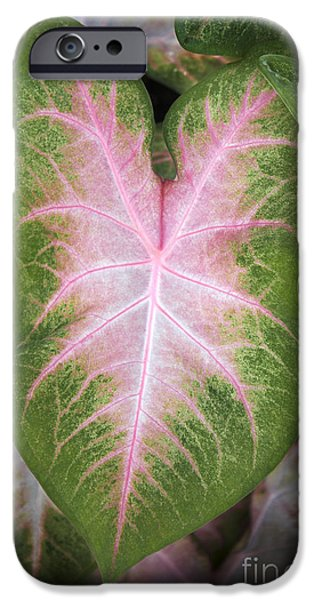 Business iPhone Cases - Leaves 2 iPhone Case by Tony Cordoza