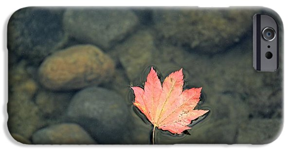 Fallen Leaf On Water iPhone Cases - Leaves are Falling iPhone Case by Rachel Cash