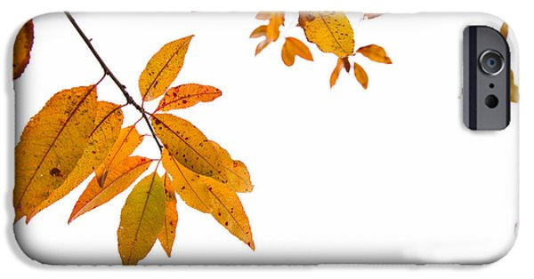 Leaf Change iPhone Cases - Leaves Changing iPhone Case by Karol  Livote