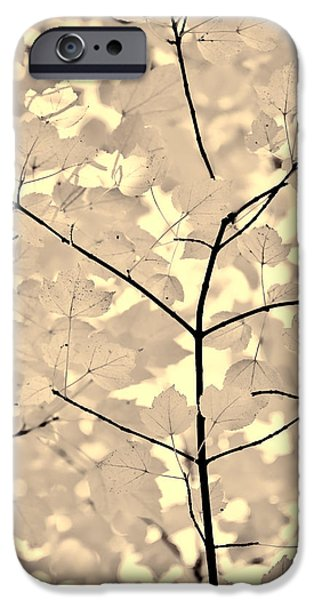 Leaves Fade to Beige Melody iPhone Case by Jennie Marie Schell