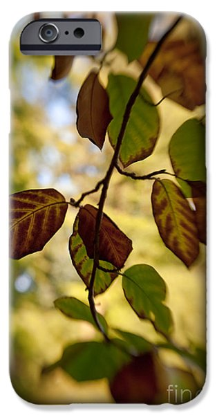 Leaves in the Breeze iPhone Case by Venetta Archer