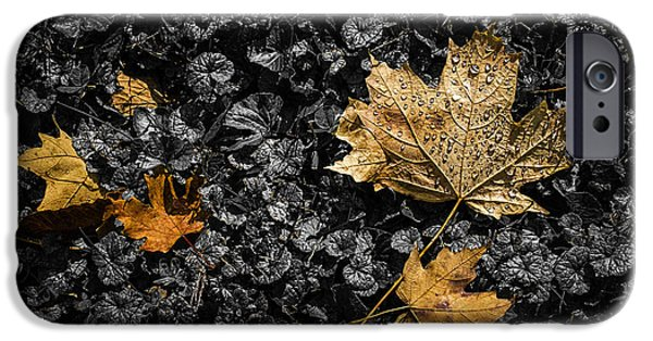 Impacting iPhone Cases - Leaves on Forest Floor iPhone Case by Tom Mc Nemar