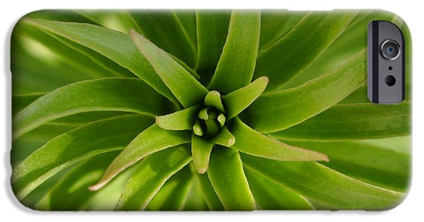 Orsillo Photographs iPhone Cases - Leaves spiral iPhone Case by Eva Csilla Horvath