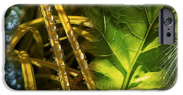 Raining iPhone Cases - Leaves With Rain Drops iPhone Case by Panoramic Images
