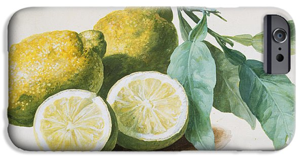 Lemon iPhone Cases - Lemons iPhone Case by Pierre Joseph Redoute
