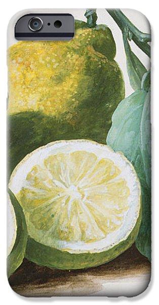 Lemons iPhone Case by Pierre Joseph Redoute