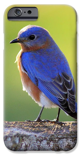 Business Photographs iPhone Cases - Lenores Bluebird iPhone Case by Robert Frederick