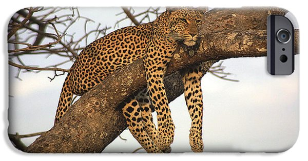 Sunset Reliefs iPhone Cases - Leopard Having A Tranquil Life. iPhone Case by Raphael  Sanzio