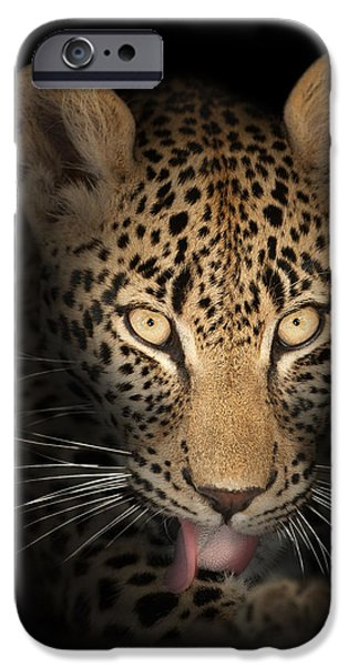 leopard in the dark iPhone Case by Johan Swanepoel